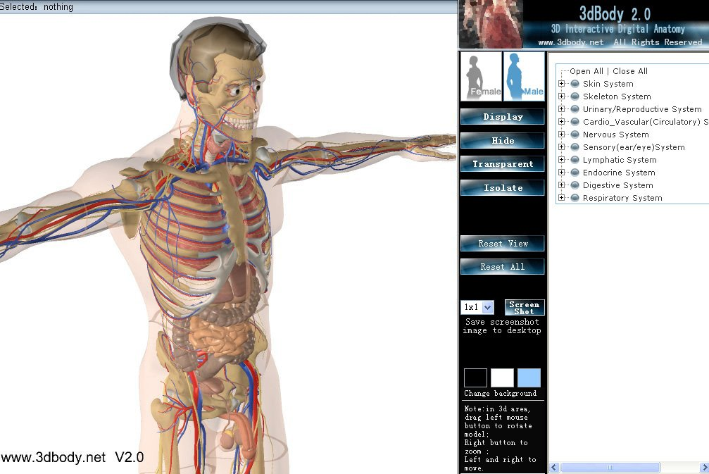 3DBody is a 3D interactive digital anatomy software